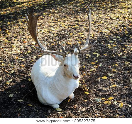 Portrait Of A Deer, A Deer In The Forest