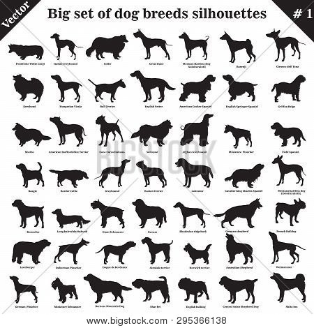 Big Set Of 49 Different Dogs, Hounds, Working, Shepherd, Terrier, Companion, Hunting. Vector Set Of