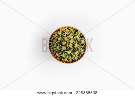 Echinocactus Grusonii, A Type Of Succulent, Isolated On White Background