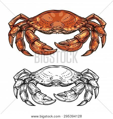 Crab sea animal sketch of marine shellfish vector design. Ocean crustacean with red claws, pincers, carapace and walking legs. Seafood, underwater wildlife, mediterranean cuisine restaurant menu theme poster