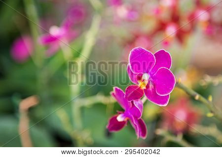 Close Up Of Purple Orchid For Background
