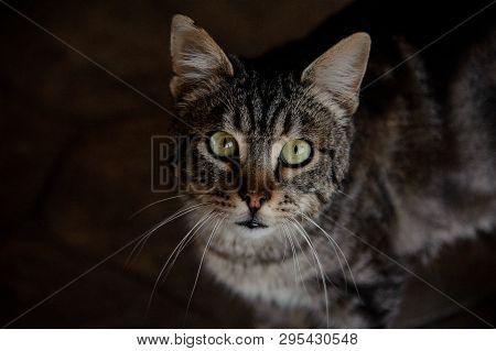 Portrait Of Insightful Cat In Animal Shelter
