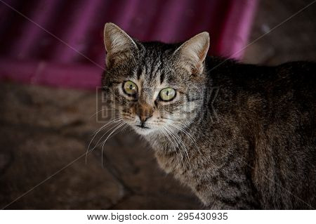 Close Shot Of Homeless Cat With Requiring Eyes