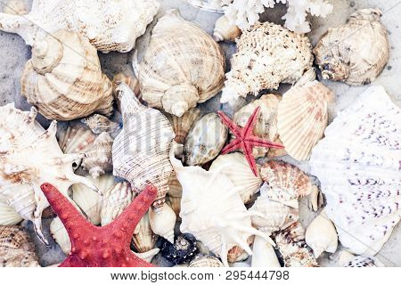 Seashells And Red Seastars On The Sand, Summer Beach Background Travel Concept