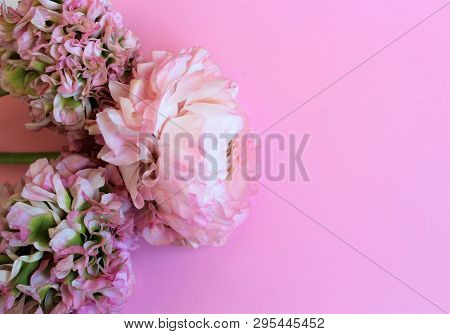 Delicate Light Pink Flowers (ranunculus) Isolated On Pink Background. Background For Greetings, Invi