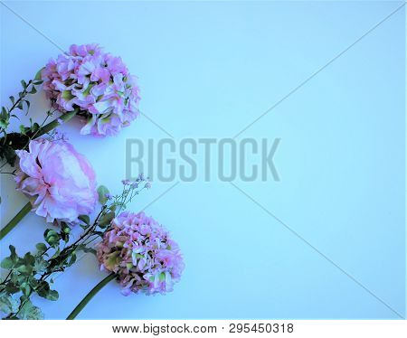 Bouquet Of Light Pink Flowers (ranunculus) Isolated On White Background. Pastel Color. Background Fo
