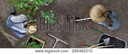 Man And Woman Together Gardening Work In The Vegetable Garden Man Place A Plant In The Ground And Wo
