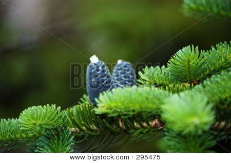 Silver Pine Cone