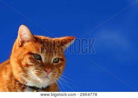 Yellow tabby cat looking for prey in winter poster