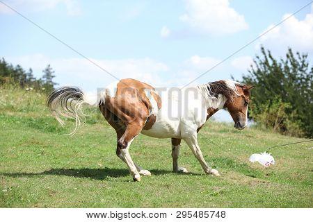 Nice Horse Running On Pasturage