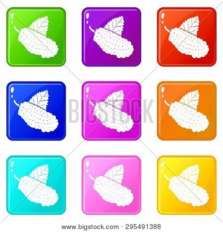 Mulberry Icons Set 9 Color Collection Isolated On White For Any Design