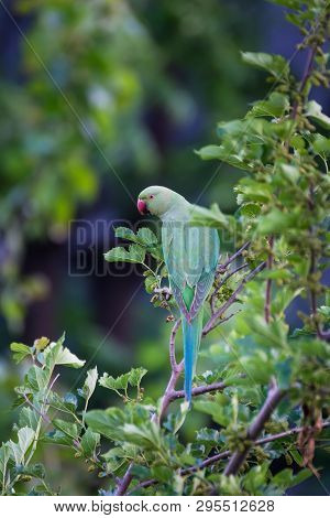 Green Parrot On Tree Branch Searching Food