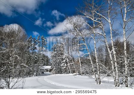 Beautiful Aspen Trees In Woods After A Snowfall With Sun Shining Through Clouds In Blue Sky With A T