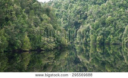 Lush Rain Forest On A Gordon River Cruise In Tasmania