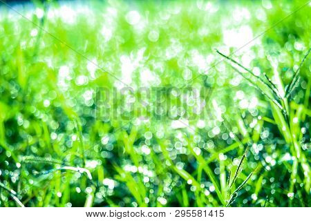 Green Grass In Garden And Blur Of Water Drop On Leaves In Rainny Season