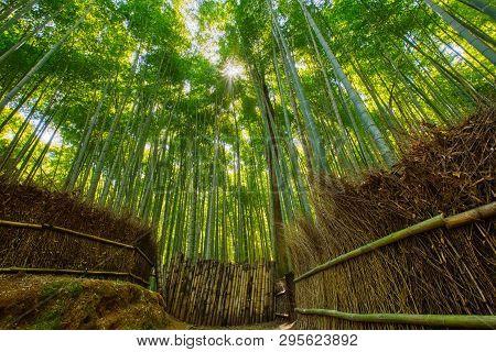 Bamboo Forest And Walking Path In Arashiyama, Kyoto, Japan.