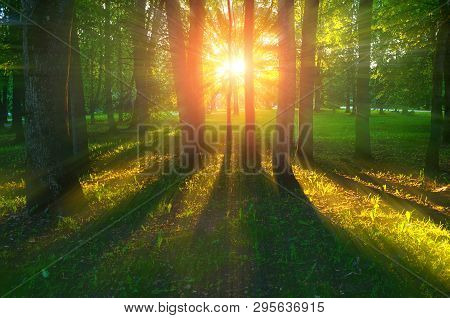 Forest summer landscape - forest trees with grass on the foreground and sunlight shining through the forest trees, colorful summer forest landscape scene
