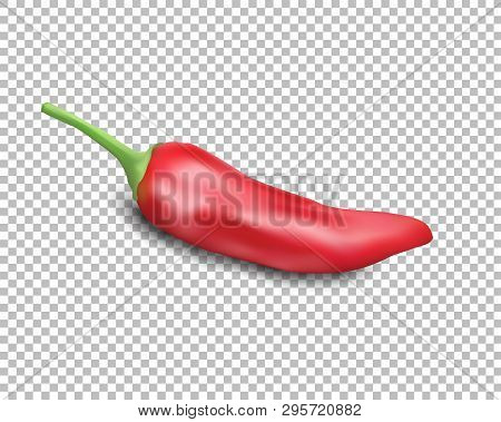 Red Hot Natural Chili Pepper Pod Realistic Image With Shadow Vector Illustration. Design For Grocery