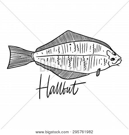 Fish Hallbut. Hand Drawn Vector Illustration. Engraving Style. Isolated On White Background.