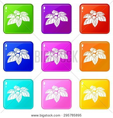Whortleberries Icons Set 9 Color Collection Isolated On White For Any Design