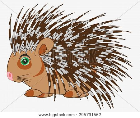 Animal Porcupine On White Background Is Insulated