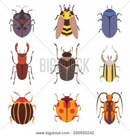 Collection Of Various Insects Species, Bugs, Beetles, Wasp, Top View Vector Illustration