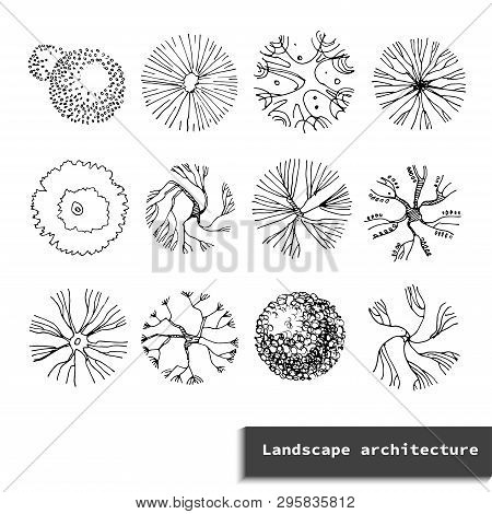 Top View Vector Set Of Different Trees.hand Drawn Illustration For Landscape Design, Plan, Maps.coll