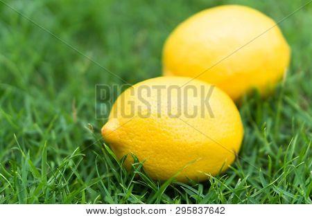 Closeup Fresh Lemon Fruit On Green Grass Background, Selective Focus