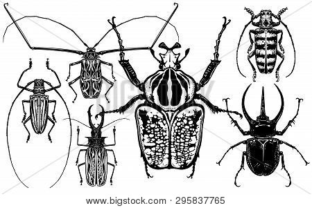 Insects Set. Beetles Isolated On White Background. Goliath, Harlequin, Rhinoceros Beetle And Others.