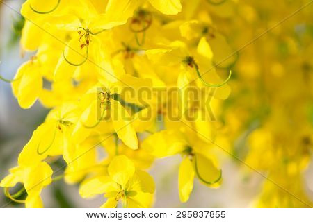 Close Up Yellow Multply Flower On Tree Branch In Summer Season, Selective Focus