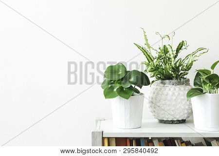 The Minimalistic And Scandinavian Home Interior With Plants Composition And Vintage Accessories On T