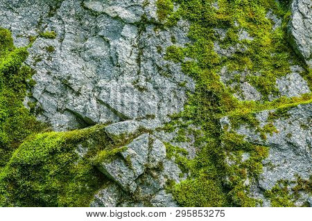 Moss On A Rock Face. Relief And Texture Of Stone With Patterns And Moss. Stone Natural Background. S