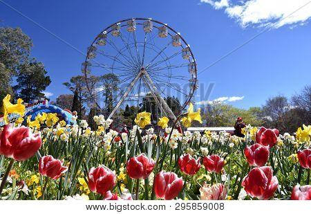 Canberra, Australia - Sept 29, 2018. Ferris Wheel At The Spring Festival Of Floriade. Masses Of Tuli