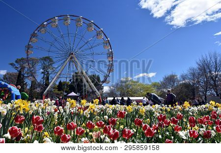 Canberra, Australia - Sept 29, 2018. Ferris Wheel At The Spring Festival Of Floriade. Masses Of Tuli