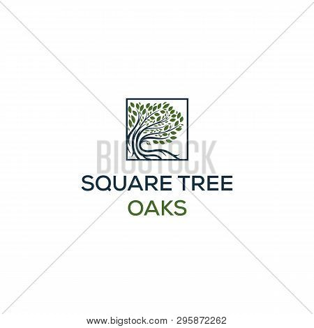 Olive Tree Logo Designs With Creeks Or Rivers Symbol In Square Logo