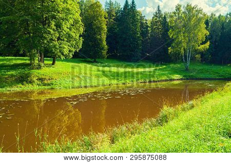 Spring forest landscape. Green spring forest trees near the river in sunny weather, spring forest nature scene