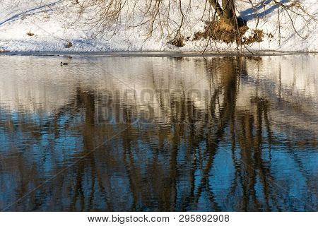 Beautiful Reflection Of Trees In The Mirror Of A River With A Floating Duck.