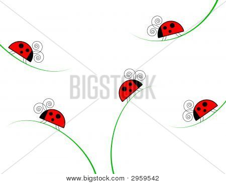 Ladybugs On Grass