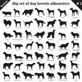 Big set of 49 different dogs, hounds, working, shepherd, terrier, companion, hunting. Vector set of different  dogs standing in profile. Isolated dogs breed silhouettes set in black color on white background. poster