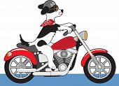 A dog is riding a red motorcycle. His ears scarf and tail are flying in the wind and his helmut has bone decals. poster