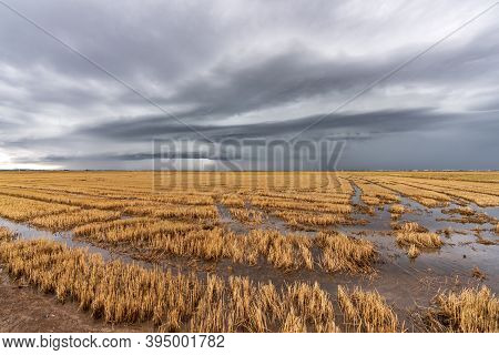 Flooded Rice Fields And Storm Over Albufera, Valencia