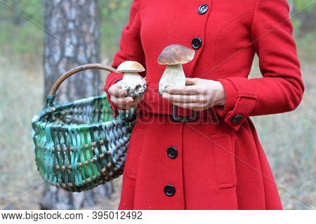 A Woman In A Red Coat With A Wicker Basket Is Holding Two Beautiful Boletus Edulis Edible Mushrooms,