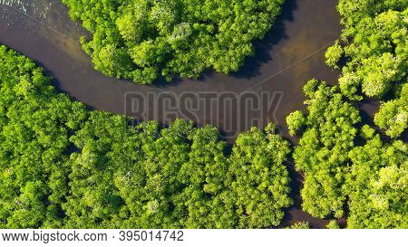 Mangrove Trees In The Water On A Tropical Island. An Ecosystem In The Philippines, A Mangrove Forest