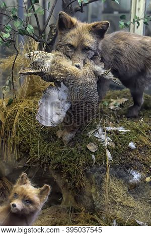 Russia, St. Petersburg 27.03.2020 Stuffed Animals - An Exhibit Of The Zoological Museum