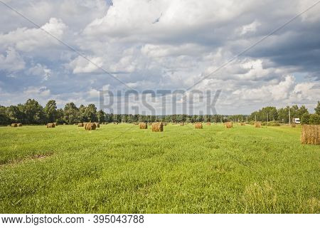 Autumn Field After Harvesting Forage Crops For Livestock Feed In Winter.