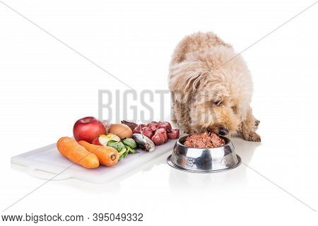 Healthy Dog Feeding On Barf Raw Meat Diet On White Background