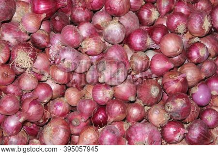 Allium Cepa, Many Red Colour Fresh Onion In The Shop With Onion Background. The Onion, Also Known As