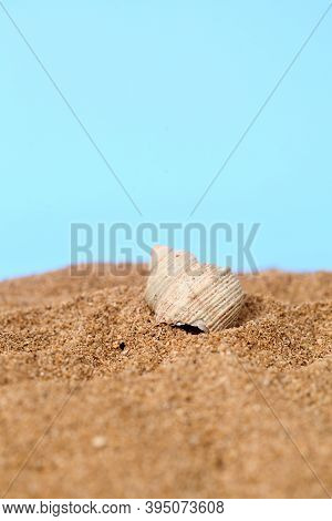 Kelomang Or Umang-umang (pompong), Or Some Who Translate It As Hermit Crabs Or Hermit Crabs, Are Dec