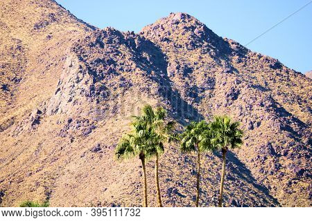 Palm Trees With Barren Mountains Beyond Taken At The Colorado Desert In Palm Springs, Ca