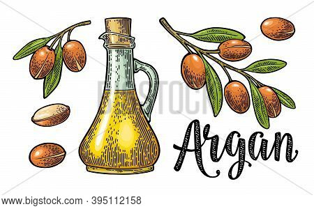 Set Of Argan Branches, Leaves, Nuts, Bottle With Oil. Vector Vintage Engraving
